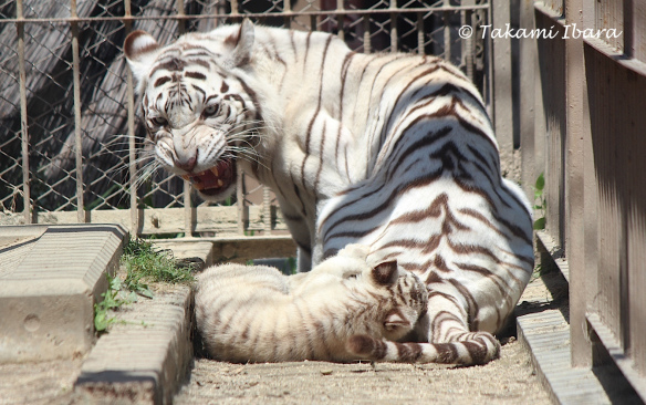 20150520-handful-cubs-2-2