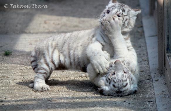 20150520-handful-cubs-3-2